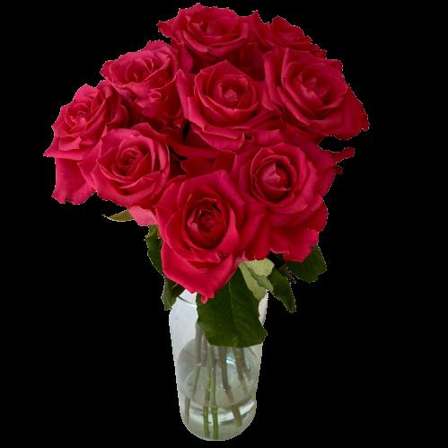 Kytica cyklaménových ruží Magenta