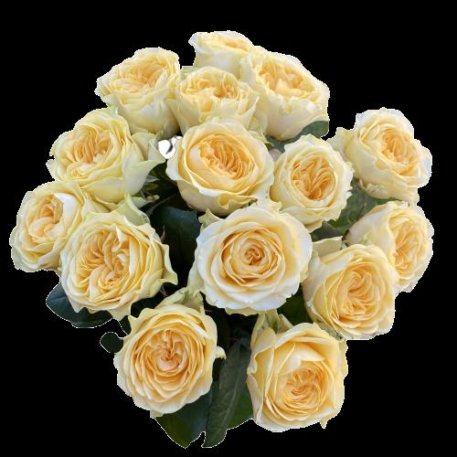 Kytica žltých ruží Creamy