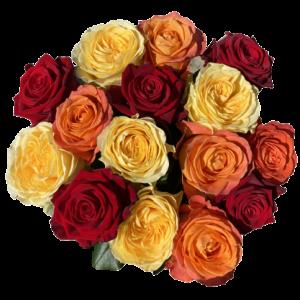 Kytica ruží jesenných farieb Fall
